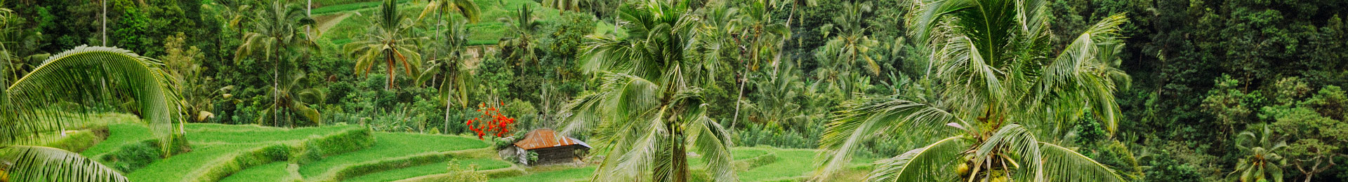 Магічний острів Балі: гори, джунглі, океан