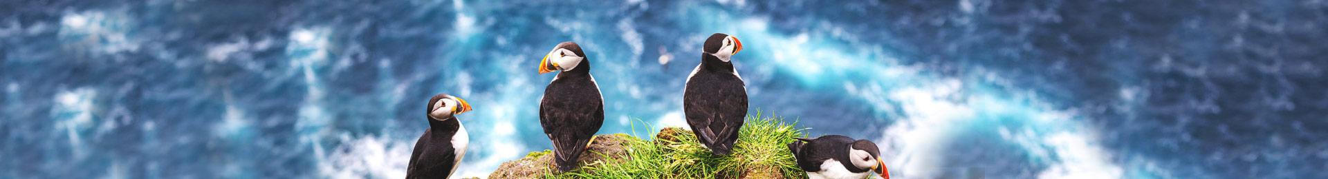 Фарерські острови: загублений шматок Європи